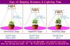grow_plant3.jpg